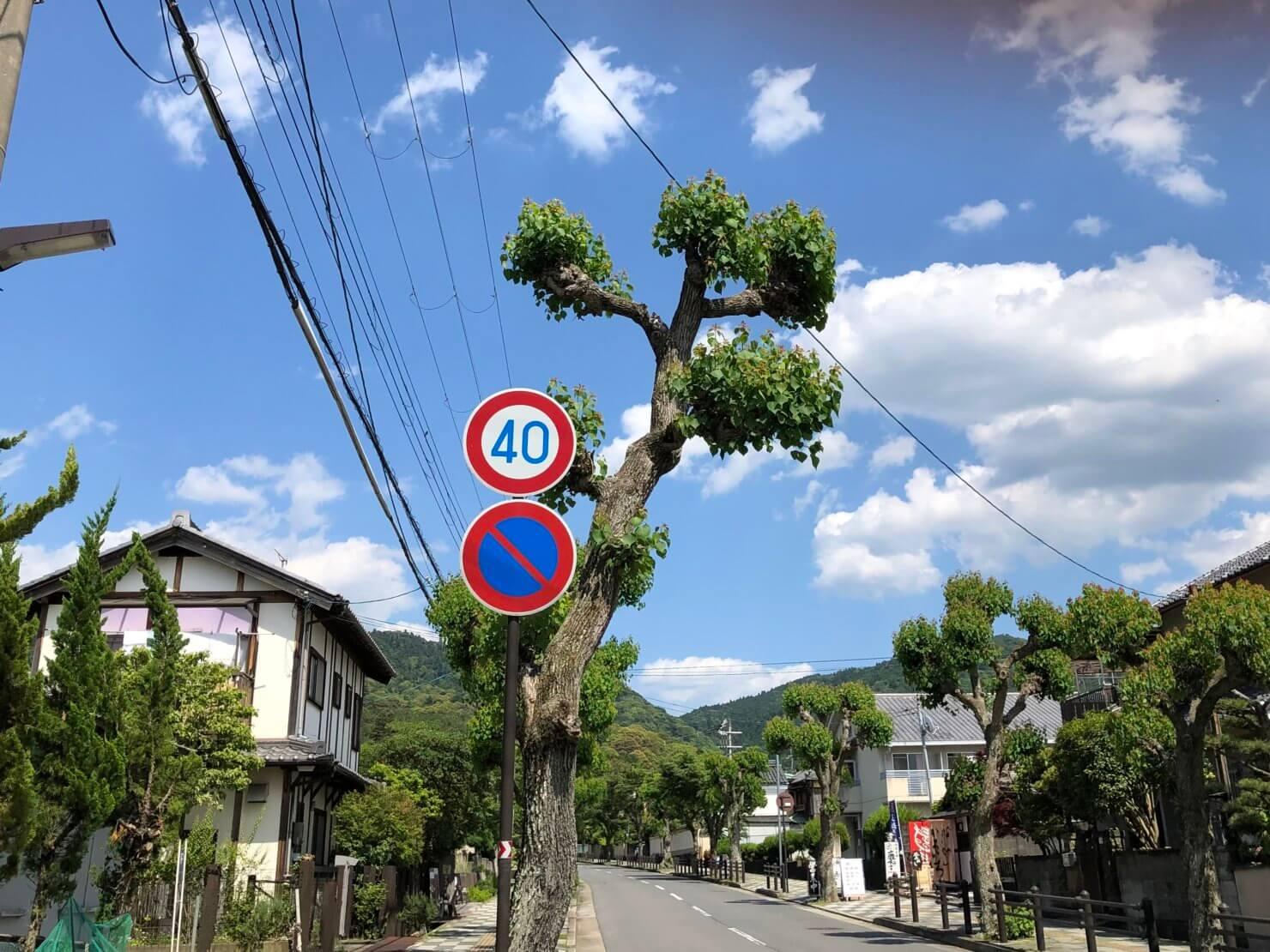 タウの木さん